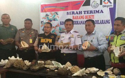 Petugas Bandara Gorontalo Amankan 20 Spesies Biota Laut Yang Dilindungi
