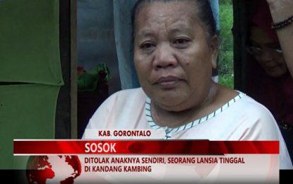 Warta 67 – (video) Ditolak Anaknya Sendiri, Seorang Lansia Tinggal Di Kandang Kambing