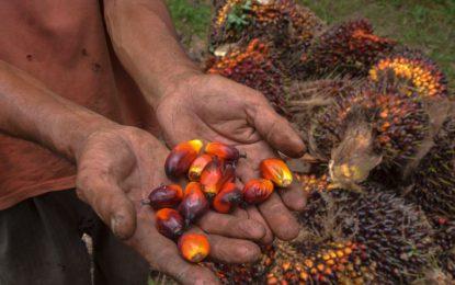 Lindungi Ekspor Minyak Sawit, Indonesia Akan Ratifikasi Perjanjian Dagang Dengan Indonesia