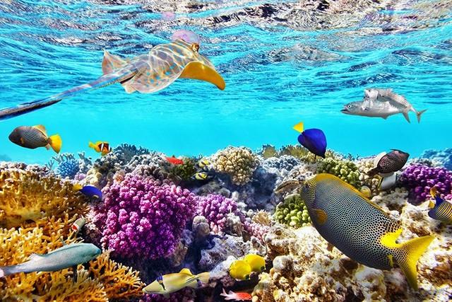 Manfaat Terumbu Karang Bagi Biota Laut Dan Manusia Mimoza Tv